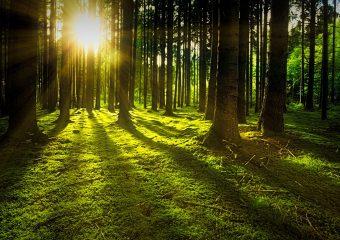 Waldbegehung des Gemeinderates am 24.07.2019