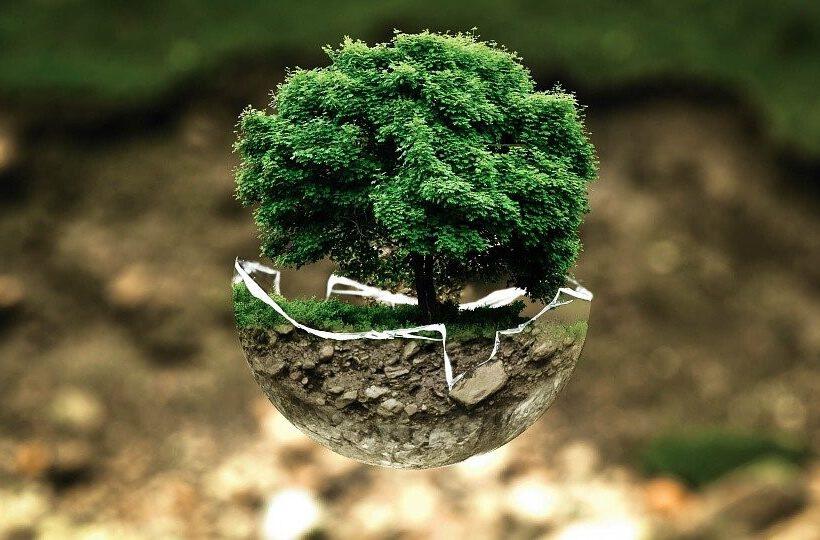 Waldbewirtschaftung in Waldbronn in Zeiten des Klimawandels